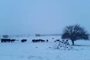 australian in july snow has fallen across craiglea at hobbys yards near