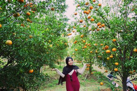 wisata petik buah  malang cintai alam lebih dekat