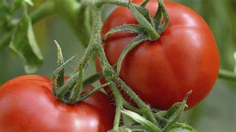 grow a vegetable garden starting a vegetable garden gardening