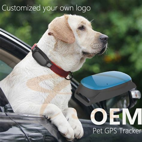 gps tracking device for dogs waterproof smart cats dogs gps tracking device real time waterproof pet collars