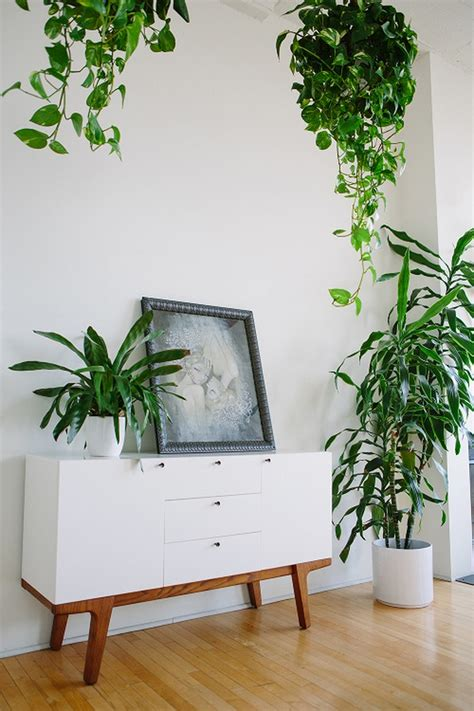 Beautiful Apartment Plants Give Space To The Green Even In Small Apartment Room