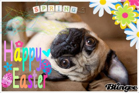 easter pug pictures easter pug picture 87784425 blingee