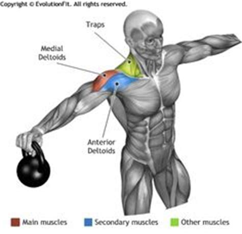 kettlebell swing anatomy shoulder workouts on pinterest lateral raises shoulder