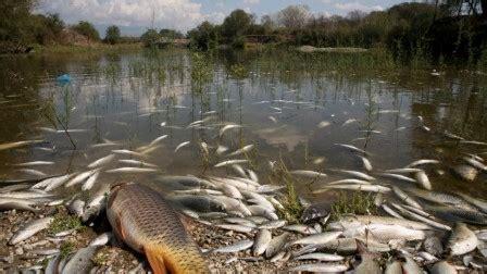 la pollution de l'environnement par les pesticides | home