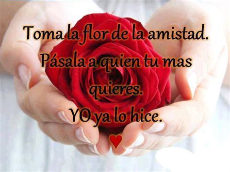 imagenes de rosas amor y amistad hermosas flores con frases de amistad ramos de flores