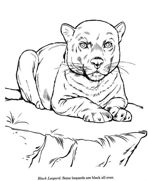 Drawing Coloring Pages Coloring Home Coloring Pages To Draw