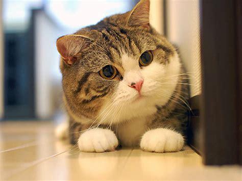 cat wallpaper nippon 不機嫌顔のネコ 行動が変なネコ 写真家ネコなど特徴的すぎてオンライン上で有名になったネコ10匹 gigazine