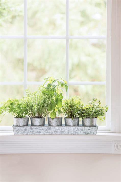 galvanized windowsill herb planters tray gardenerscom