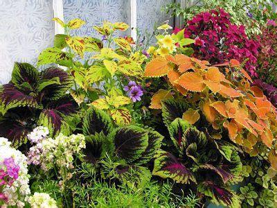 plants  north facing shady balcony garden gardening