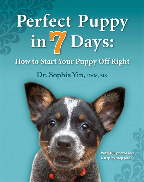 potty a puppy in 7 days puppy in 7 days how to start your puppy right dr yin