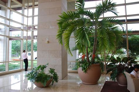 zimmerpflanzen gross zimmerpflanzen f 252 r das perfekte ambiente im haus