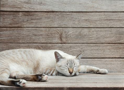 roundworms in cats petmd