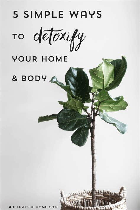 Simple Ways To Detox Your At Home by 5 Simple Ways To Detoxify Your Home And A