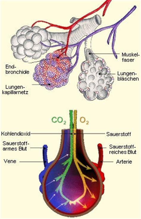 luftnot im liegen selbsthilfegruppe copd lungenfibrose und langzeit