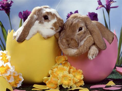 why is the rabbit associated with easter rabbit fascinating animals