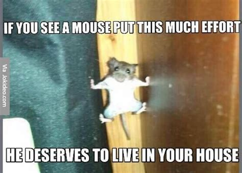 Mouse Memes - 25 most funniest mouse meme pictures and images of all the