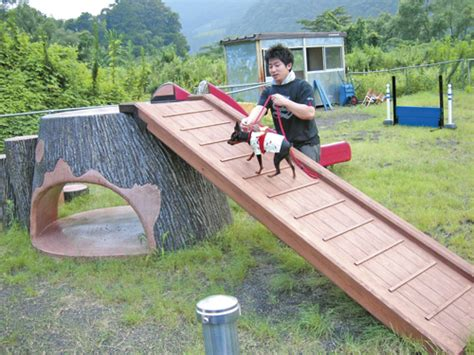 dog playground equipment backyard minnaegao rakuten global market small dog labo dog lab