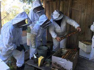 start a beehive in your backyard backyard beekeeping 2 days watershed landcare incorporated