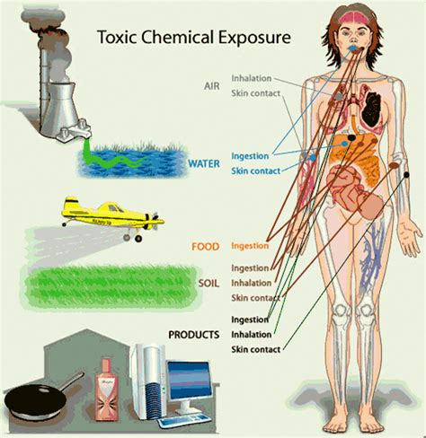 Detox For Chemical Exposure by Toxic Chemicals Affect Your Brain Hormones And Health
