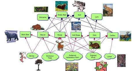 grizzly food chain diagram food web glacier national park