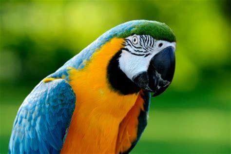 libro drle doiseau les troubles respiratoires chez les oiseaux troubles respiratoires chez l oiseau sant 233 des