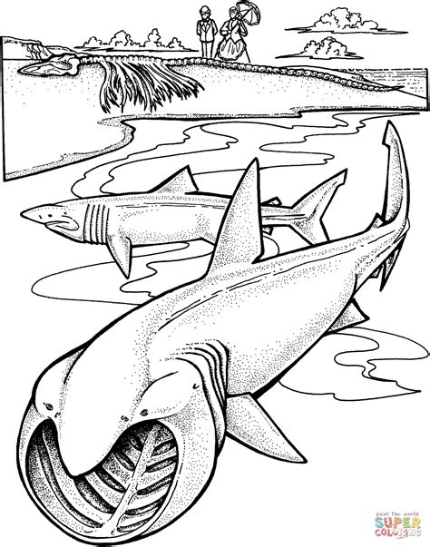 san jose sharks coloring page san jose shark free coloring pages