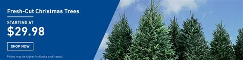 shop christmas trees at lowes com