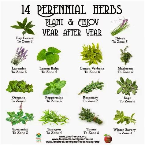 herb growing chart one ash plantation homestead perennial herb chart i have