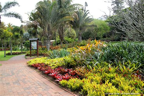 bromeliads durban botanic janet davis explores colour