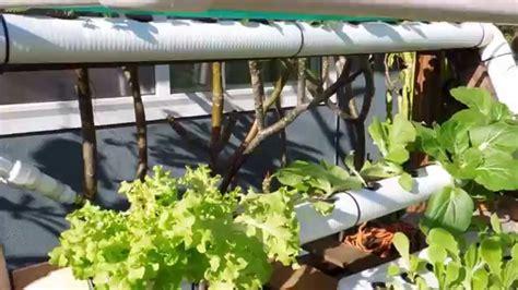 diy backyard hydroponic garden youtube