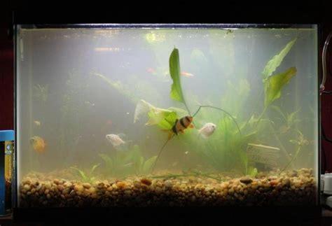 mauvaise odeur de l eau et taches noires sur le dans un aquarium d eau douce causes
