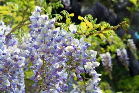 oroscopo dei fiori oroscopo dei fiori pollicegreen