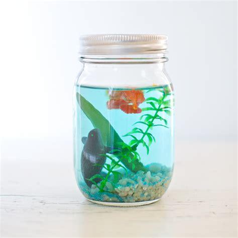 themes mekar jar hello wonderful make a mason jar aquarium