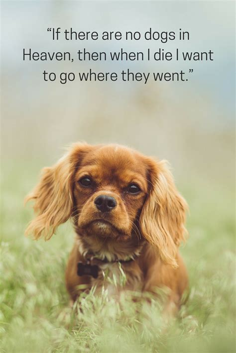 where do dogs go when they die 75 of the best inspired quotes puppy leaks