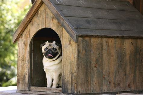 ways to stop a dog from peeing in the house stop a dog from peeing in their doghouse cuteness