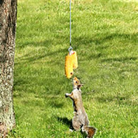 duncraft com bungee jumping for squirrels