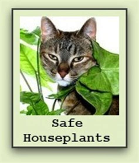 house plants safe for cats gardening advice blogit