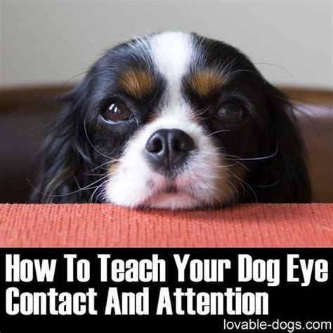 eye contact with dogs 17 best images about on treats for dogs and