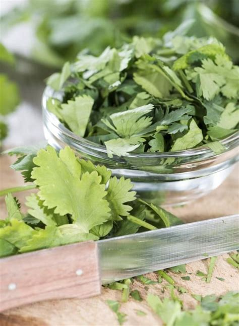 Cilantro Tea Detox by Best 25 Cilantro Benefits Ideas On Cilantro