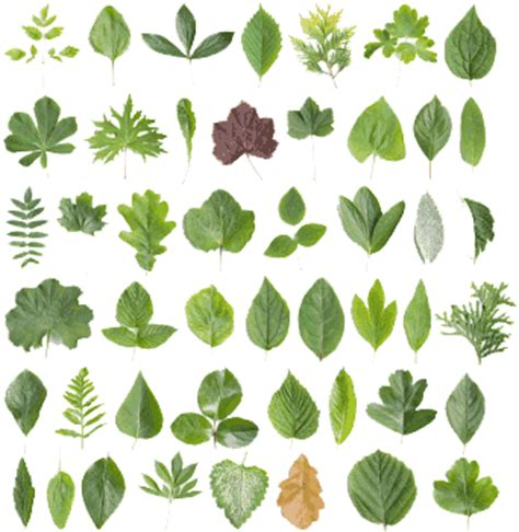 Indoor Herbal Garden by Know Your Plants Nebraska Regional Poison Center
