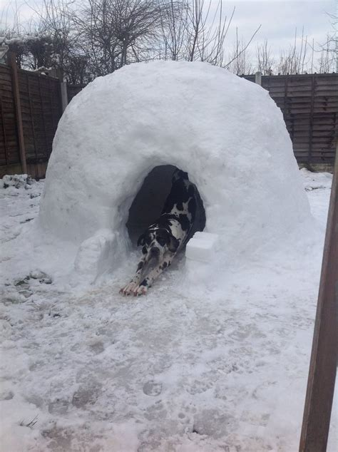 dog houses igloo igloo dog house not just for eskimos anymore mybktouch com