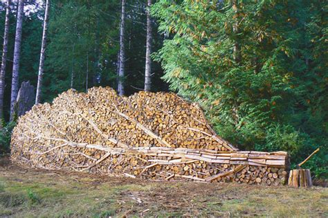 the wood for the trees one s view of nature books wood stack pith vigor