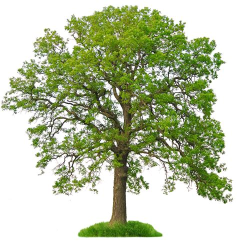 trees free download clip art free clip art on