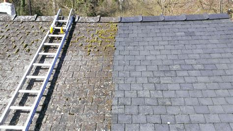 moss treatment removal proclean ireland