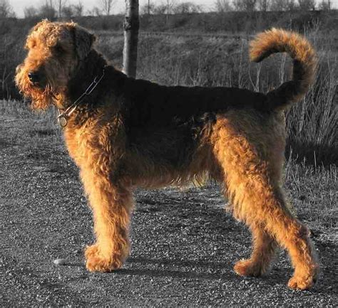 list of all breeds list of all terrier breeds photo