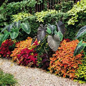 Coleus Topiary - quick and easy color southern living