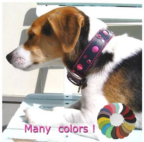 awesome collars around the collar collar and leash collection