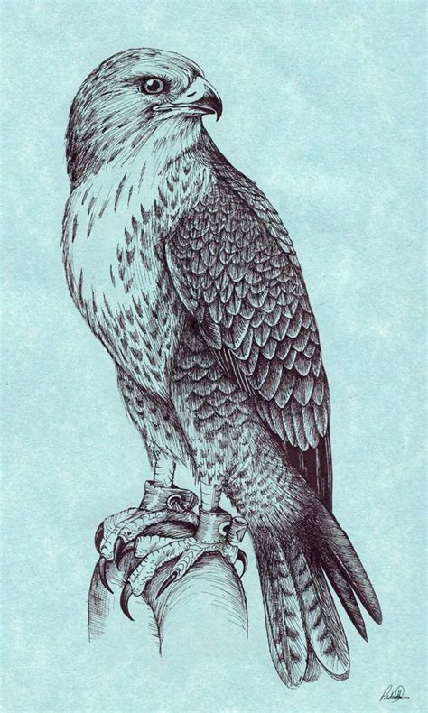 peregrine falcon tattoo designs 25 best ideas about falcon on celtic
