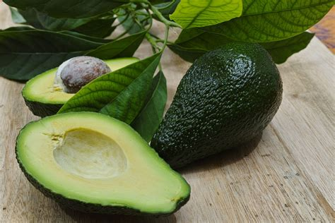avocado and dogs avocado poisoning in dogs symptoms causes diagnosis treatment recovery