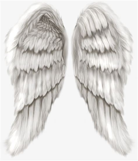 Anggle Cape Wing realistic wings png www pixshark images